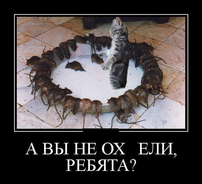 saentologicheskaia-tcerkov-moskvy-ofitcialnyi-sait