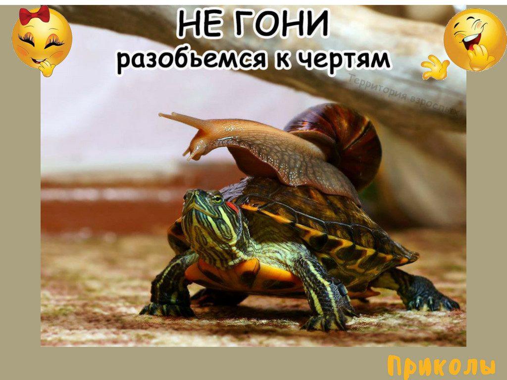 tcerkov-saientologii