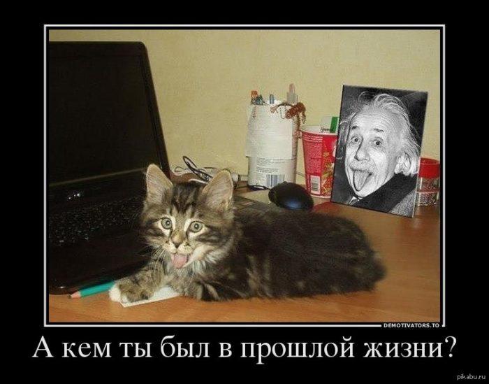 dianeticheskij-oditor